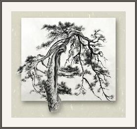 心空老樹仍長進