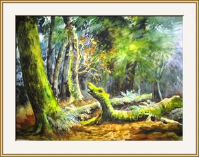 龍頭樹(加州紅樹公園)
